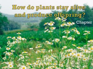 How do plants stay alive and produce offspring?