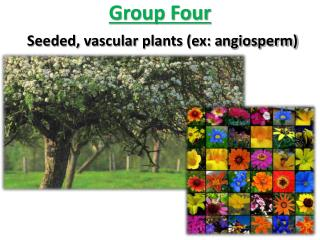 Group Four Seeded, vascular plants (ex: a ngiosperm)