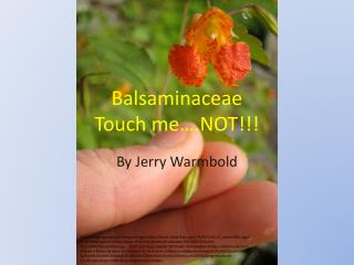 Balsaminaceae Touch me….NOT!!!