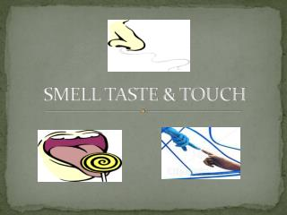 SMELL TASTE & TOUCH