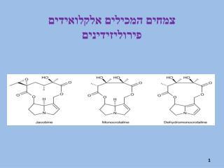 צמחים המכילים אלקלואידים  פירוליזידינים