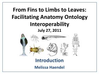 From Fins to Limbs to Leaves: Facilitating Anatomy Ontology Interoperability July 27, 2011