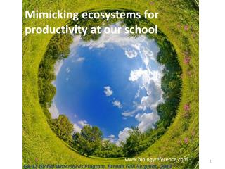Mimicking  ecosystems for productivity at our school