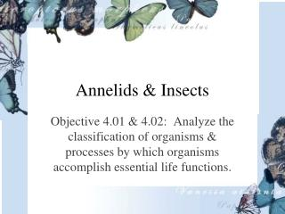 Annelids & Insects