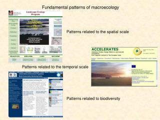Fundamental patterns of macroecology