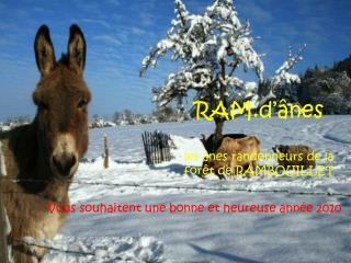 RAM.d'ânes les ânes randonneurs de la forêt de RAMBOUILLET
