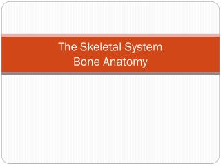 The Skeletal System Bone Anatomy