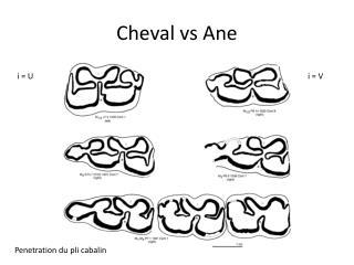 Cheval vs  Ane
