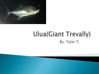 Ulua(Giant Trevally)