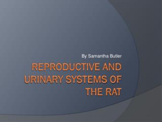 Reproductive and Urinary Systems of the rat