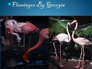 Flamingos  By  G eorgia