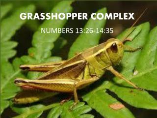 GRASSHOPPER COMPLEX