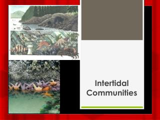 Intertidal Communities