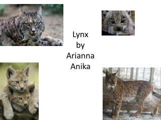 Lynx by Arianna Anika