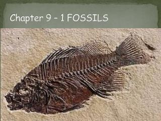 Chapter 9 – 1 FOSSILS