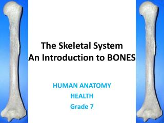 The Skeletal System An Introduction to BONES