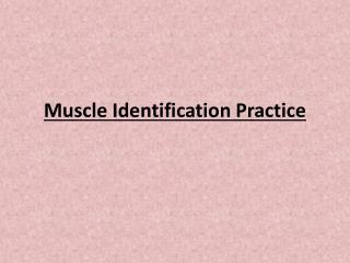 Muscle Identification Practice