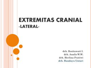 EXTREMITAS CRANIAL - LATERAL-