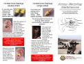 Army Earplug Reference