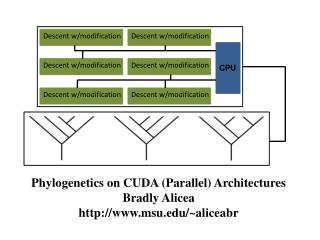 Phylogenetics  on CUDA (Parallel) Architectures Bradly Alicea msu/~aliceabr