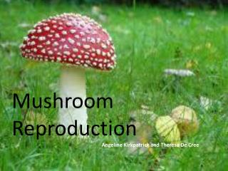 Mushroom Reproduction Angeline Kirkpatrick and Theresa De Cree