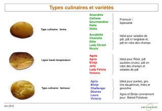 Types culinaires et variétés