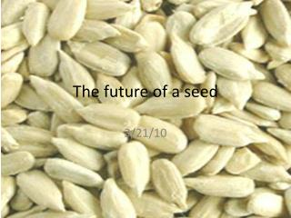 The future of a seed