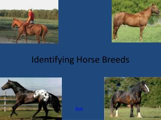 Identifying Horse Breeds