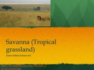 Savanna (Tropical grassland)