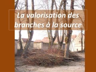 La valorisation des  branches �  la source