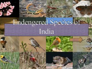 Endengered Species of India