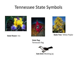 Tennessee State Symbols
