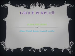 Group Purple 