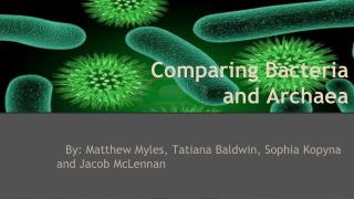 Comparing Bacteria and Archaea