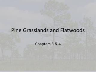 Pine Grasslands and Flatwoods