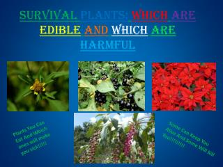 Survival  Plants: Which are edible and which are harmful