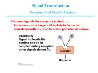 Receptors Bind Specific Ligands
