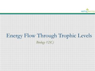 Energy Flow Through Trophic Levels