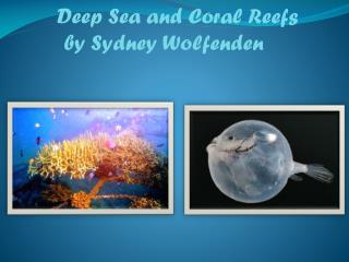 Deep Sea and Coral Reefs         by Sydney Wolfenden