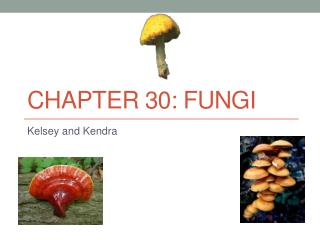 Chapter 30: Fungi