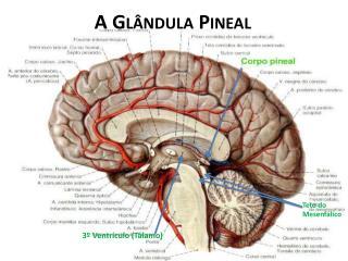 A Glândula  Pineal