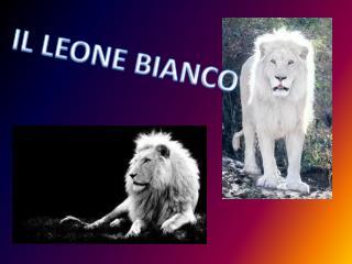 IL LEONE BIANCO
