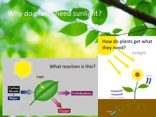 Why do plants need sunlight?