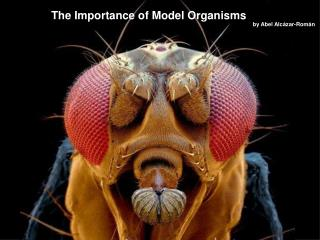 The Importance of Model Organisms