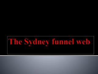The Sydney funnel web