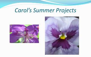 Carol's Summer Projects