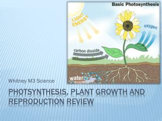 Photsynthesis , plant growth and reproduction review