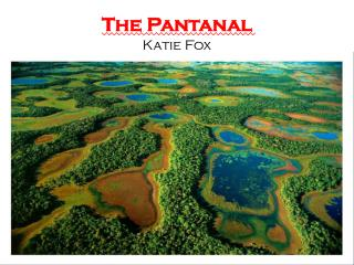 The Pantanal Katie Fox