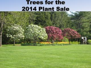Trees for the  2014 Plant Sale