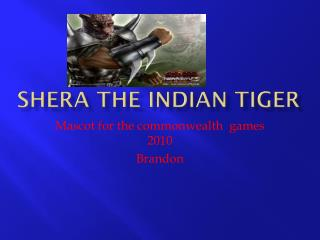 Shera the Indian tiger